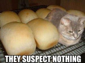 Undercover-Kitten